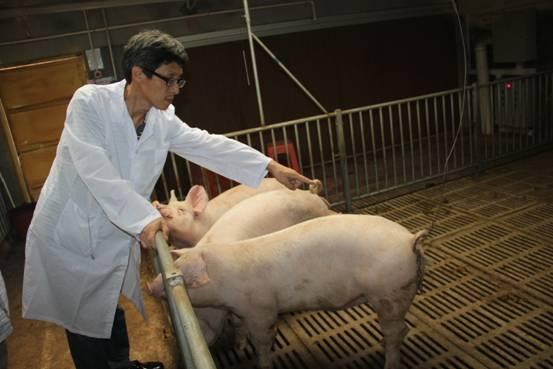 提倡保健养猪,bwin开户保健养锗是养殖业的发展趋势