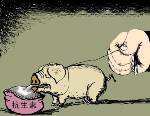 远离抗生素养猪