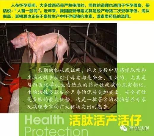 多肽保健养猪