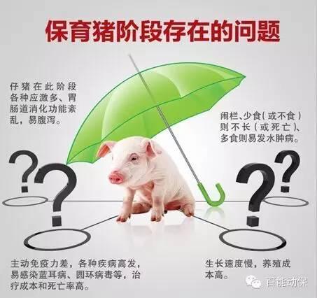 保育仔猪问题.jpg