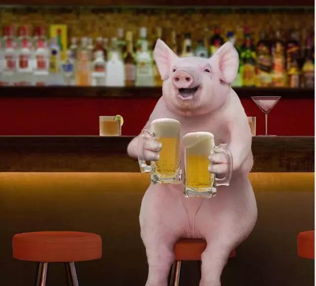 90后养猪|肥猪出栏