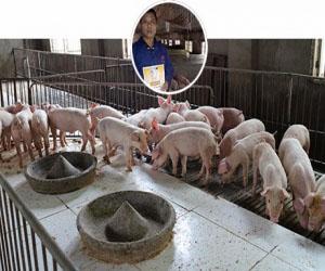 山东苍山县养殖户-任老板  存栏母猪50