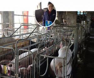 湖南衡东县养殖户-陈女士 存栏母猪30