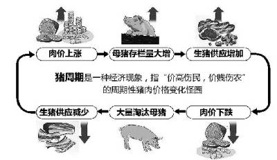 猪价轮回图.jpg