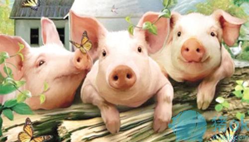 母猪场如何提高仔猪的存活率