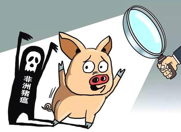 非洲猪瘟最新疫情发展|饲料猪