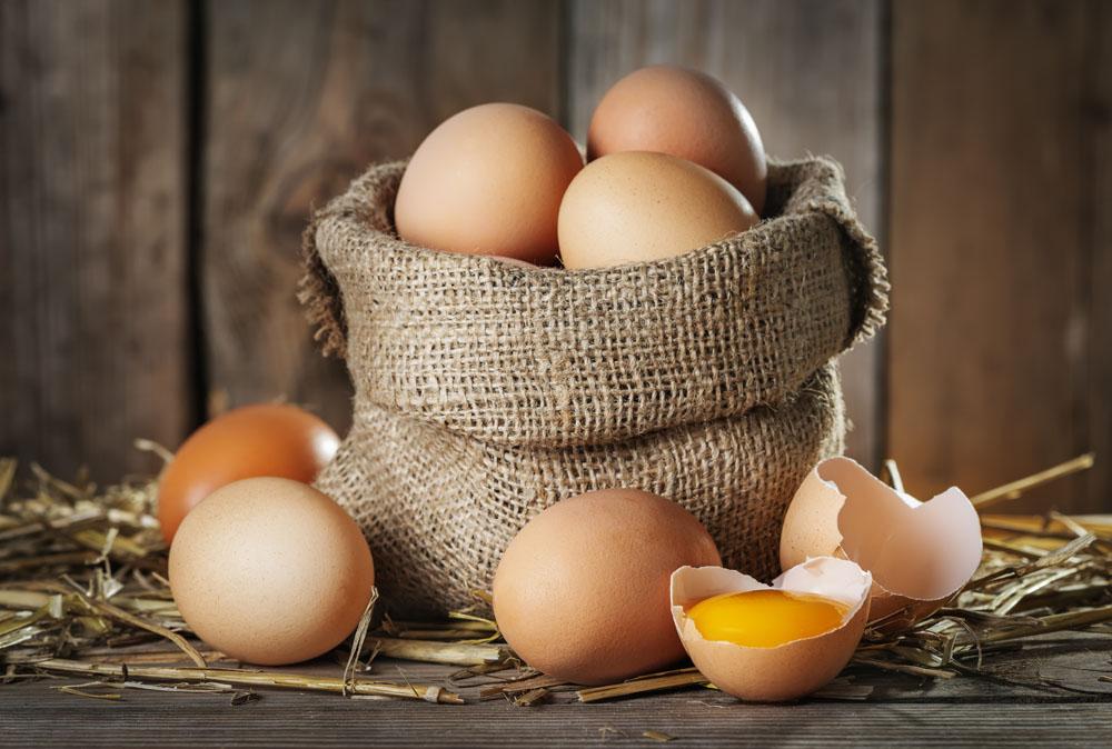 蛋鸡怎么提高产蛋率