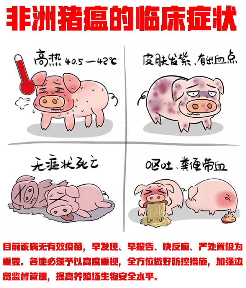 百能抗肽详情2.jpg