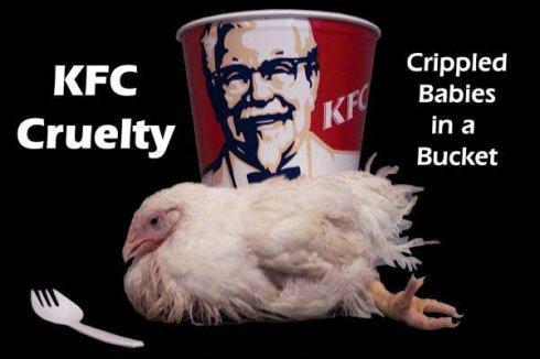 肉鸡快速催肥